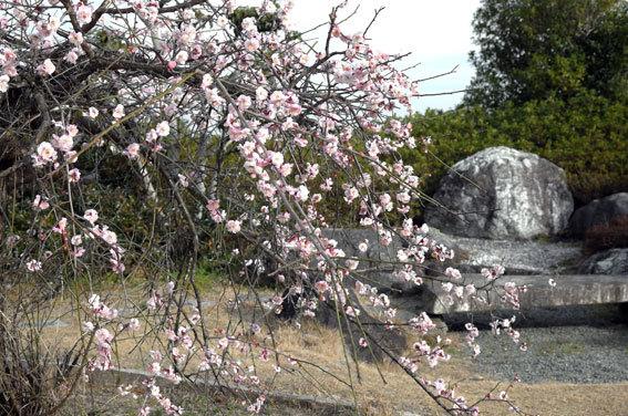 春のようにぽっかぽか_b0145296_18012393.jpg