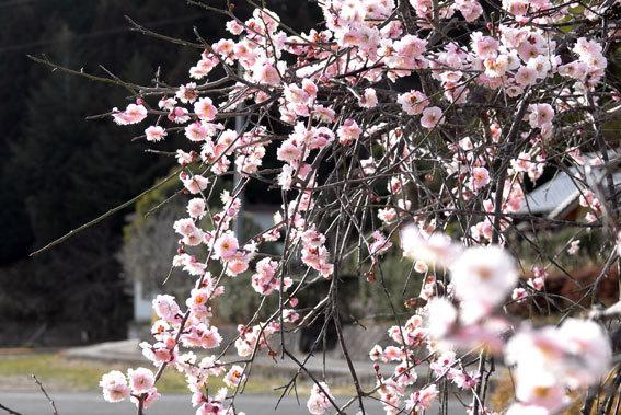 春のようにぽっかぽか_b0145296_18012715.jpg