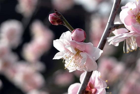 春のようにぽっかぽか_b0145296_18012904.jpg