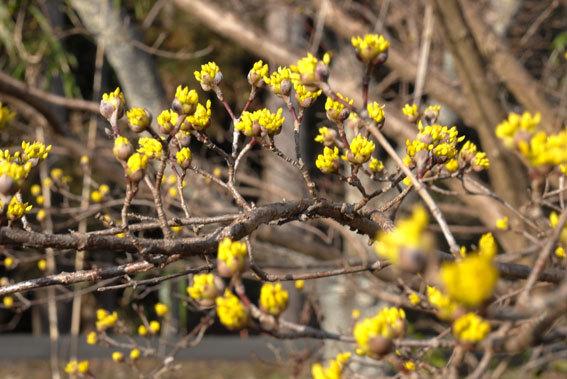 黄色いツボミがたくさん_b0145296_22015875.jpg