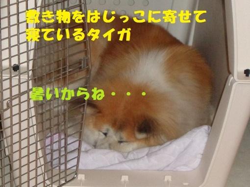 f0121712_23194644.jpg