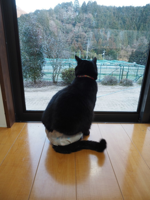 庭を眺める、くうちゃん_c0116915_23130584.jpg