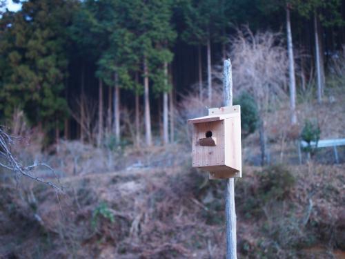 鳥の巣箱を作ろう!!_b0185232_19182692.jpg