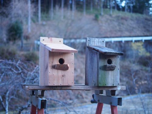 鳥の巣箱を作ろう!!_b0185232_19254076.jpg