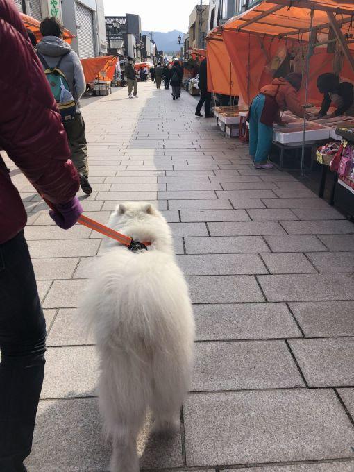 2019年冬 群馬~岐阜~石川県旅行 その2_f0128542_02035374.jpg