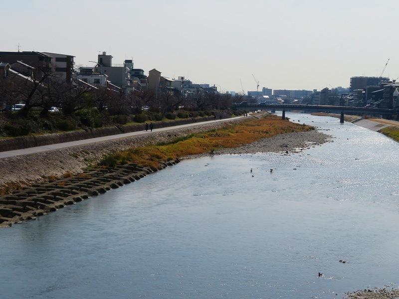 京都鴨川の様子20190225_e0237645_23202671.jpg