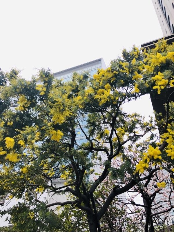 春はまだですか。&2月27日(水)のランチメニュー_d0243849_14295750.jpeg