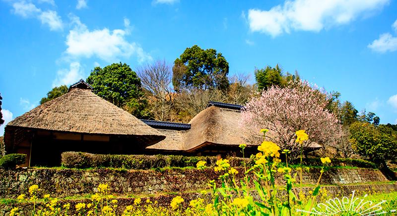 里山の春!_a0057752_09073004.jpg