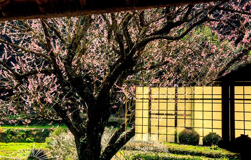 里山の春!_a0057752_09075911.jpg