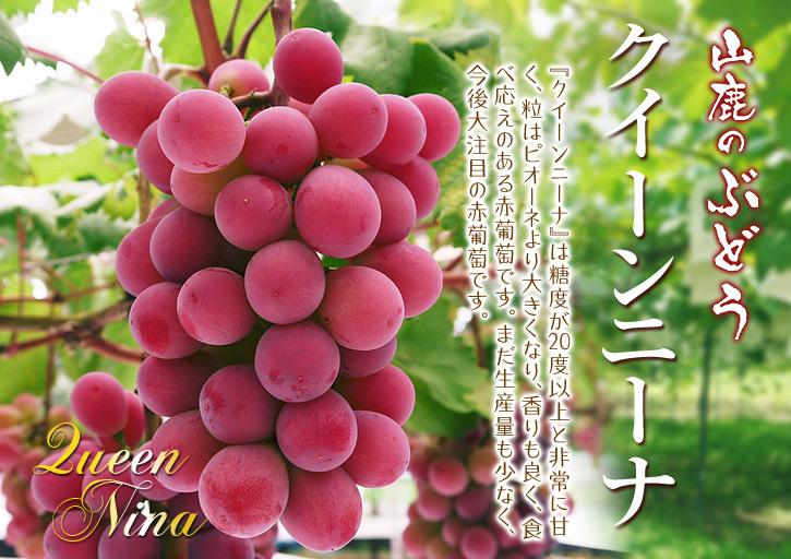 熊本ぶどう 社方園 収穫を終えたぶどう園にお礼肥えです!鹿本農業高校から来た実習生と共に(2019)後編_a0254656_17505548.jpg