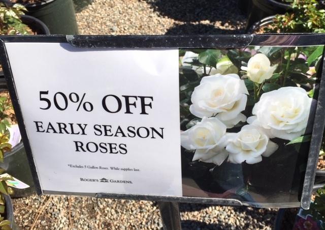 Roger\'s Gardens の薔薇の半額セール_e0350971_12123233.jpg
