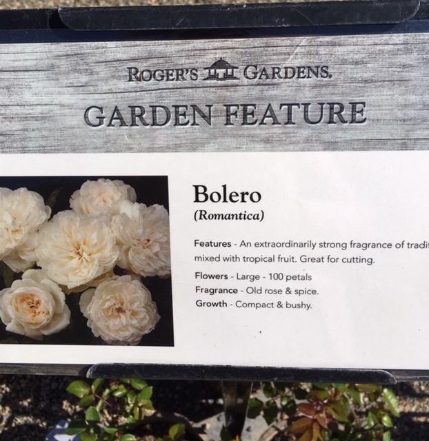 Roger\'s Gardens の薔薇の半額セール_e0350971_12132716.jpg