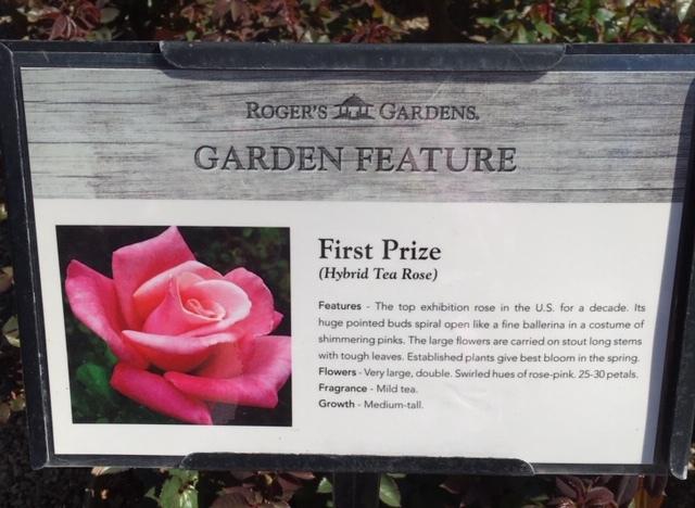 Roger\'s Gardens の薔薇の半額セール_e0350971_12141553.jpg