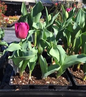 Roger\'s Gardens の薔薇の半額セール_e0350971_12191903.jpg