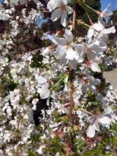 Roger\'s Gardens の薔薇の半額セール_e0350971_12202914.jpg