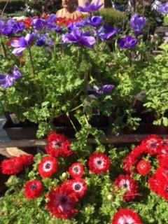 Roger\'s Gardens の薔薇の半額セール_e0350971_12214939.jpg