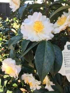 Roger\'s Gardens の薔薇の半額セール_e0350971_12232858.jpg