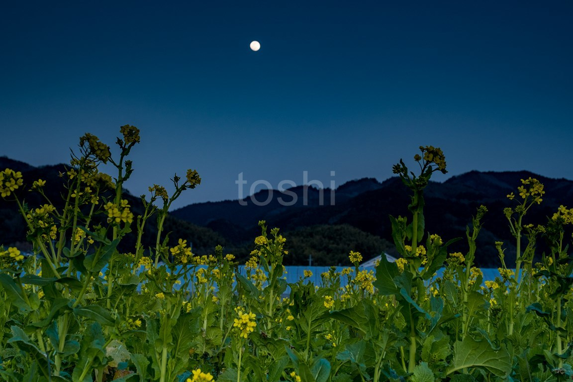 山の辺の道 夕暮れ_c0350572_16350338.jpg