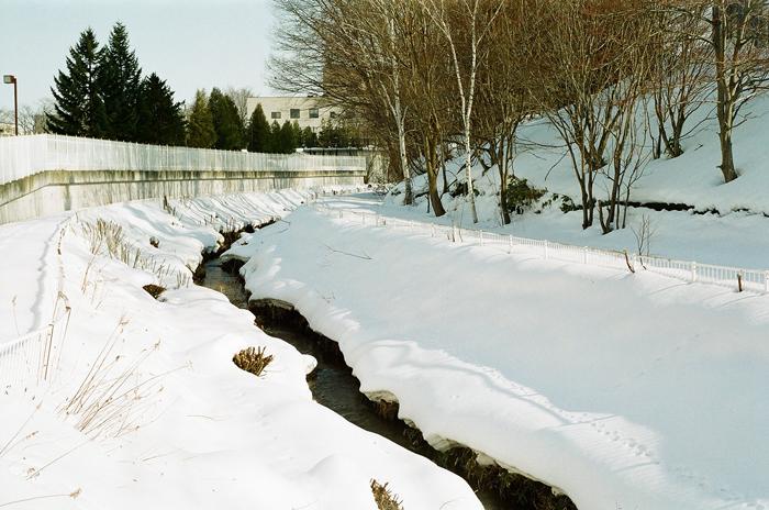 春を待つ岸辺の雪と地震で倒れた角煮雪_c0182775_16474046.jpg