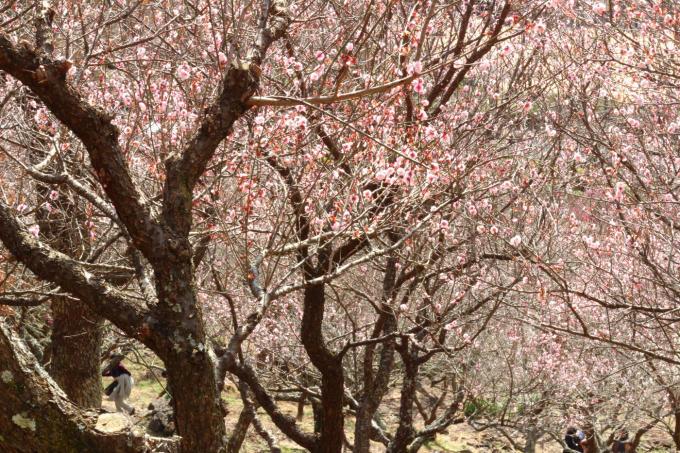 春を感じる梅の香り_f0372988_07391204.jpg