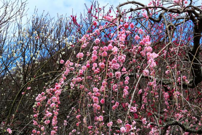 春を感じる梅の香り_f0372988_07400116.jpg