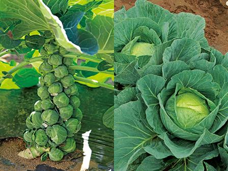 温野菜仕込み中♪_f0232994_06392121.jpg