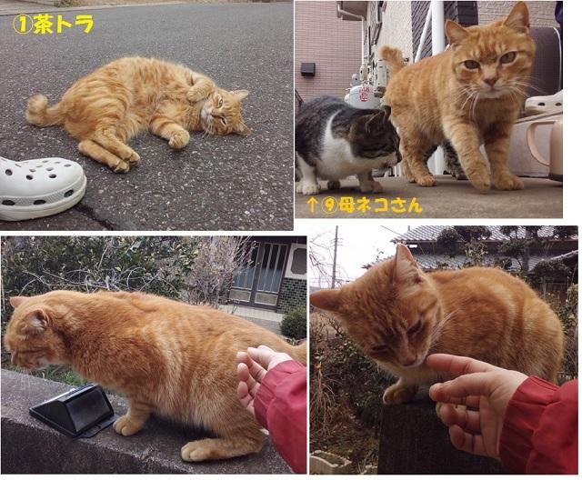 【里親さま募集】置いて行かれた猫8匹-その後-_f0242002_14402269.jpg