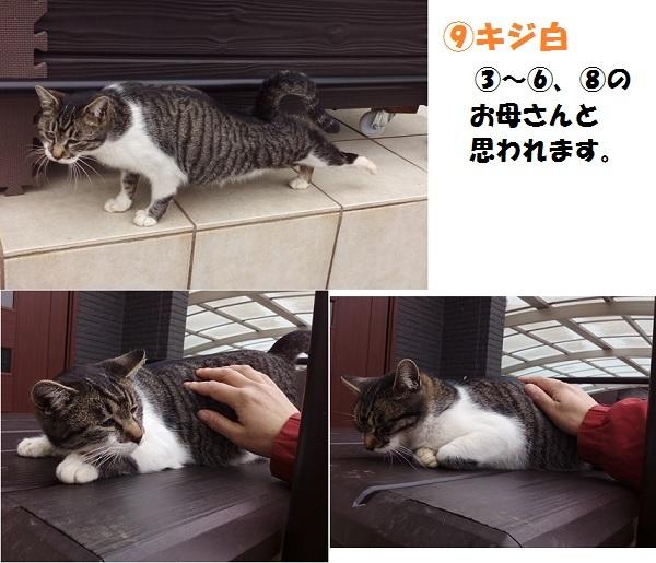 【里親さま募集】置いて行かれた猫8匹-その後-_f0242002_14402609.jpg