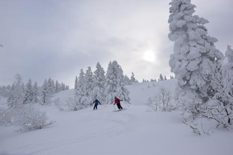 2018年12月22-24日 粉雪病の季節始まる。八甲田山で初滑り_c0242406_13142988.jpg