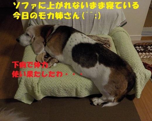 f0121712_00131819.jpg
