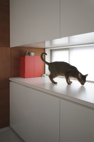 [猫的]捜査開始_e0090124_23435880.jpg