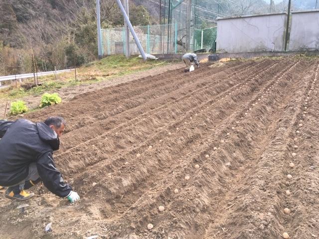 2月27日(水) ジャガイモ植えました。山間の傾斜地での畑作から里に替わって数年。まだ思考錯誤ながら慣れないマルチも張りました。_c0089831_21335022.jpeg