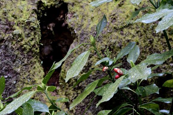 樹木公園・梅(1)_c0093046_19045539.jpg