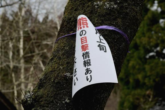 樹木公園・梅(1)_c0093046_19051670.jpg