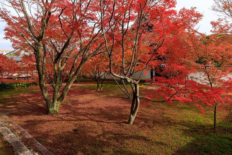 京の紅葉2018 秋色に染まる妙覚寺_f0155048_22485548.jpg