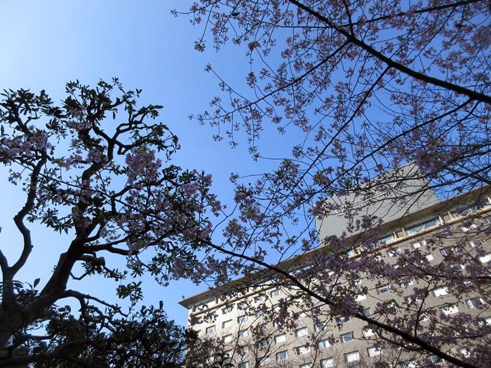 おやつタイムのラウンジ巡り【グランドプリンスホテル高輪】_b0009849_1642468.jpg