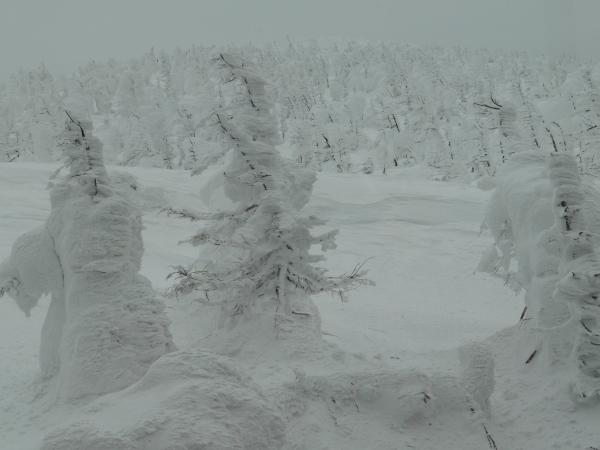 蔵王の樹氷_a0351368_22300803.jpg