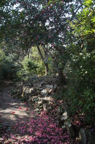 椿泊の椿自然園_e0181373_20591554.jpg
