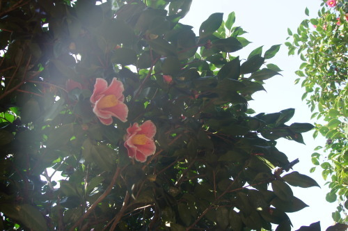 椿泊の椿自然園_e0181373_20593379.jpg