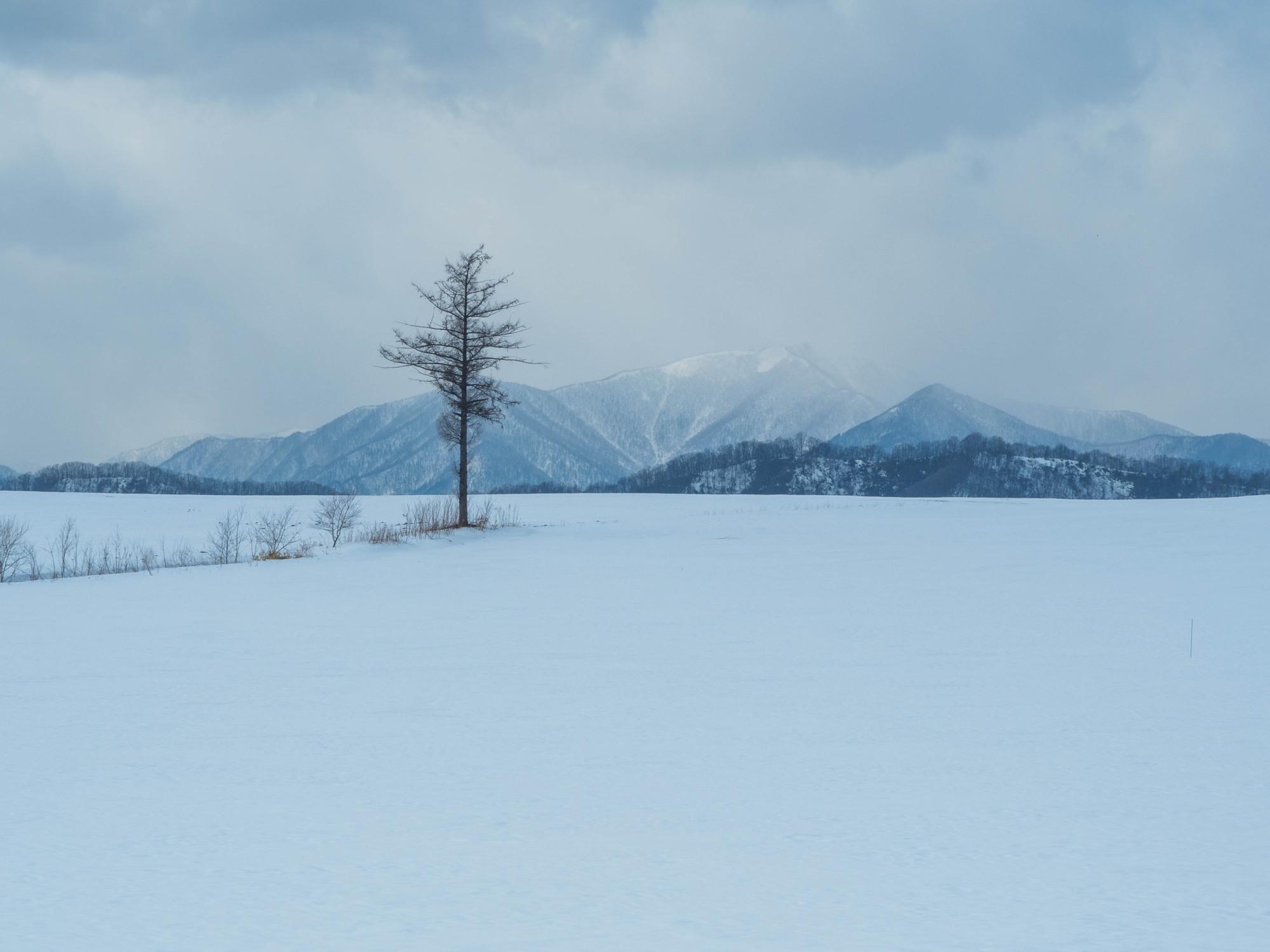 2月だけど春っぽい?中札内村とその周辺ツアー_f0276498_00012242.jpg
