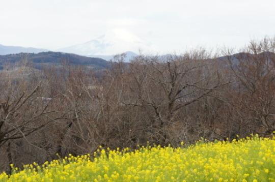 【2019年2月 伊豆旅行①(吾妻山公園】_f0215714_17005992.jpg