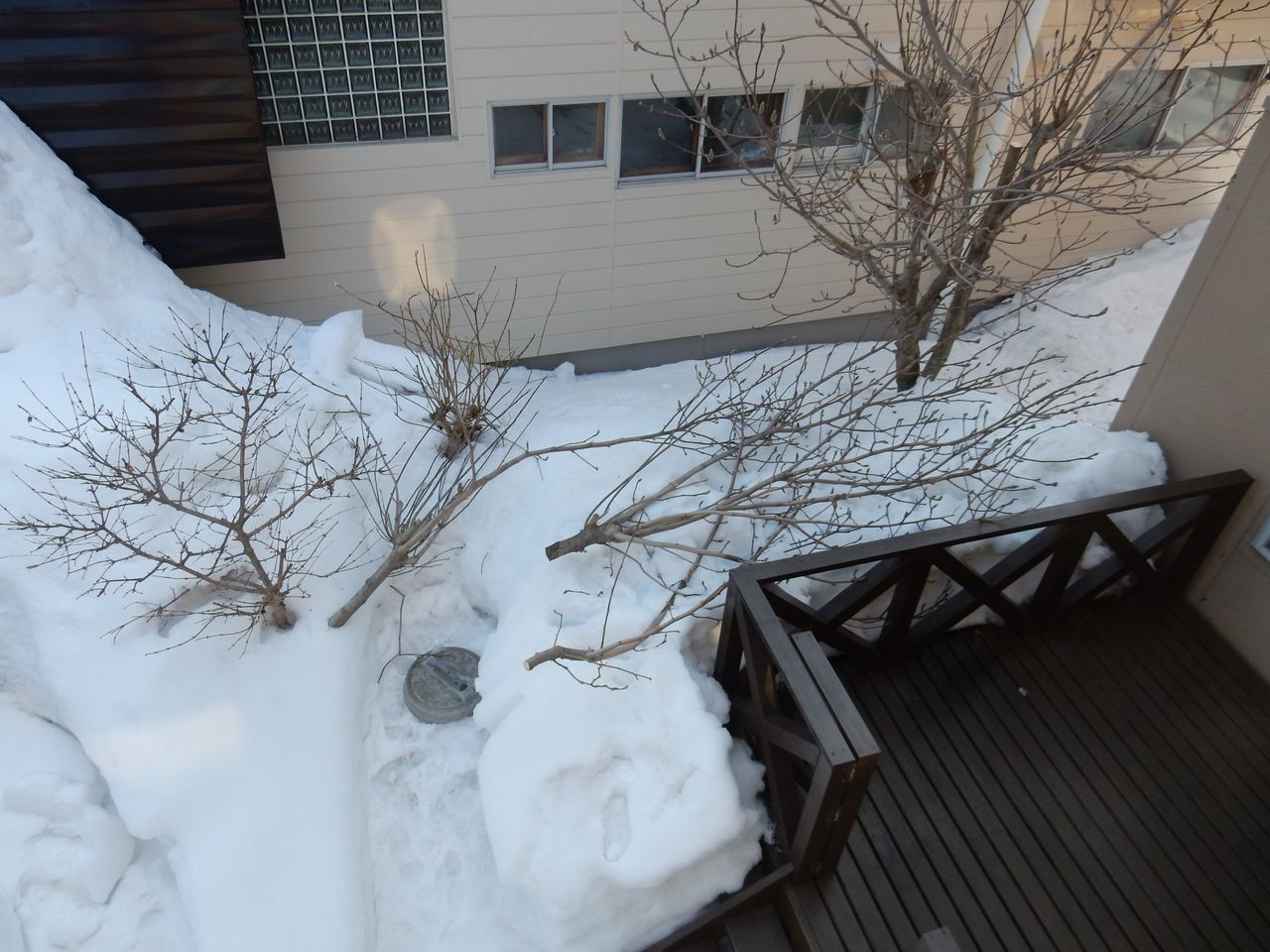 雪の深いうちにモクレンの太い枝を剪定する_c0025115_21554768.jpg