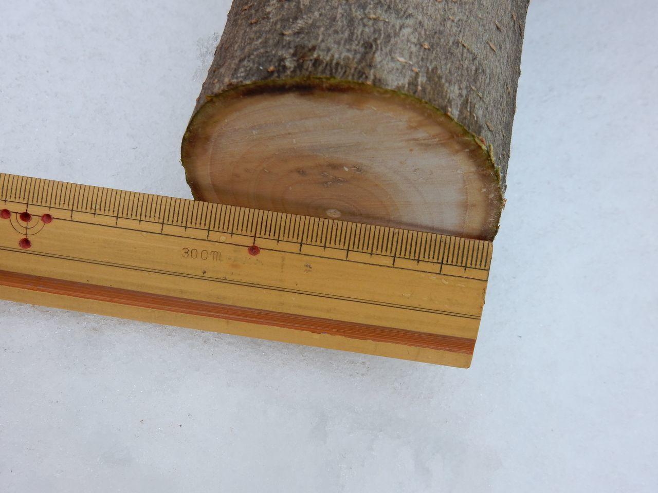 雪の深いうちにモクレンの太い枝を剪定する_c0025115_21582312.jpg