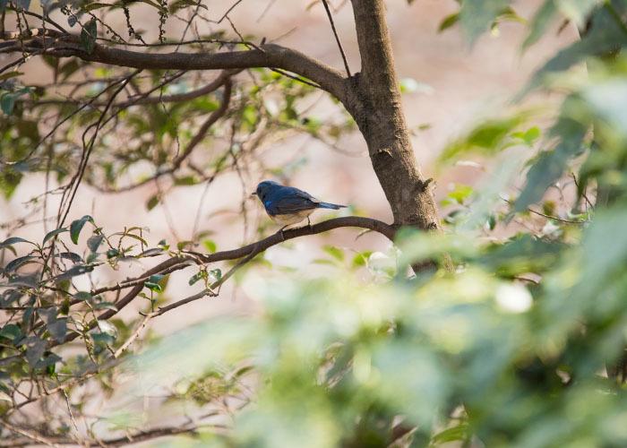 幸せの青い鳥見つけた_e0238623_23370124.jpg