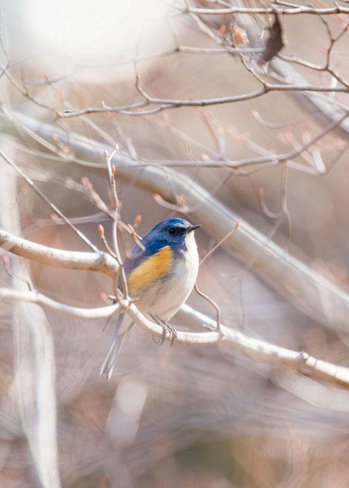 幸せの青い鳥見つけた_e0238623_23531018.jpg