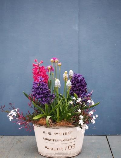 ブリキの器の小さな春、花ひらく!_f0139333_23594360.jpg