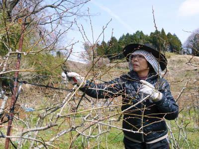 無農薬栽培のフレッシュブルーベリー 冬の様子 後編:大きくて甘い実を育てるための匠の冬の剪定_a0254656_16383695.jpg