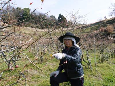 無農薬栽培のフレッシュブルーベリー 冬の様子 後編:大きくて甘い実を育てるための匠の冬の剪定_a0254656_16460957.jpg