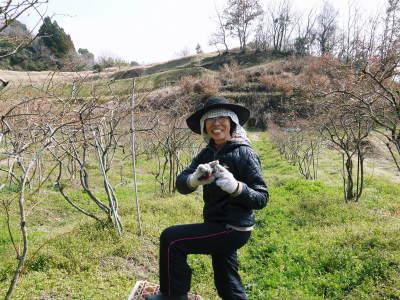 無農薬栽培のフレッシュブルーベリー 冬の様子 後編:大きくて甘い実を育てるための匠の冬の剪定_a0254656_17374415.jpg