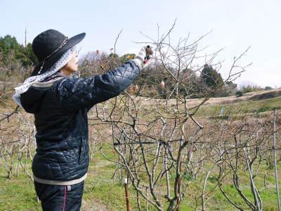 無農薬栽培のフレッシュブルーベリー 冬の様子 後編:大きくて甘い実を育てるための匠の冬の剪定_a0254656_17402618.jpg